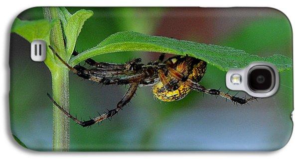 Creepy Galaxy S4 Cases - Orb Weaver Spider Galaxy S4 Case by Karen Slagle