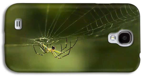 Wild Orchards Galaxy S4 Cases - Orchard Spider On Billy Goat Trail Galaxy S4 Case by Francis Sullivan