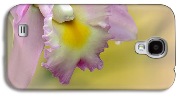 Florida Flowers Galaxy S4 Cases - Orchid Whisper Galaxy S4 Case by Sabrina L Ryan