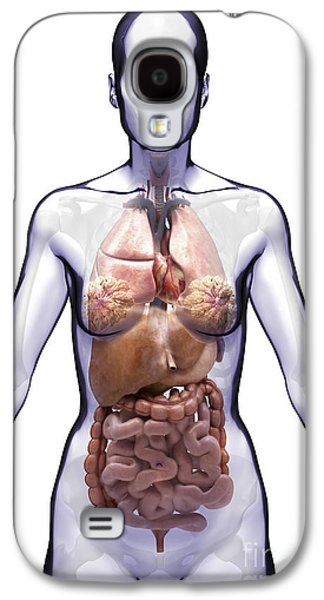 Internal Organs Galaxy S4 Cases - Organs Of The Torso Female Galaxy S4 Case by Science Picture Co