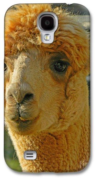 Llama Digital Galaxy S4 Cases - Orion The Alpaca 2 Galaxy S4 Case by Emmy Marie Vickers