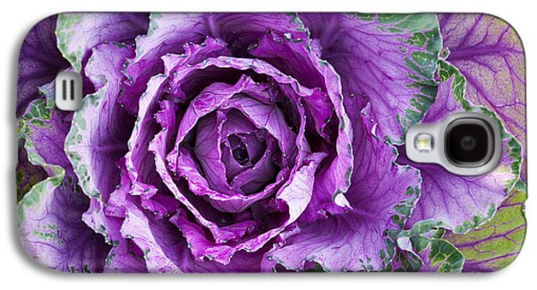 Ornamental Cabbage Galaxy S4 Case by Tim Gainey