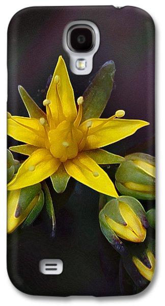 Bloosom Galaxy S4 Cases - Orus Pistillus Galaxy S4 Case by Valentina Rapacchietta