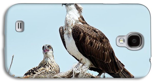 Osprey And Chick Galaxy S4 Case by Bob Gibbons