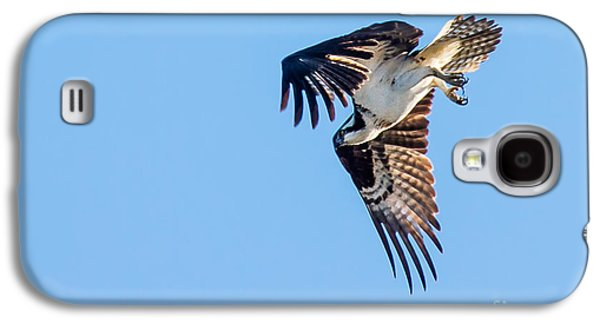 Haybale Galaxy S4 Cases - Osprey Diving Galaxy S4 Case by Robert Bales