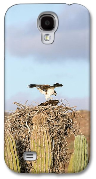 Ospreys Nesting In A Cactus Galaxy S4 Case by Christopher Swann