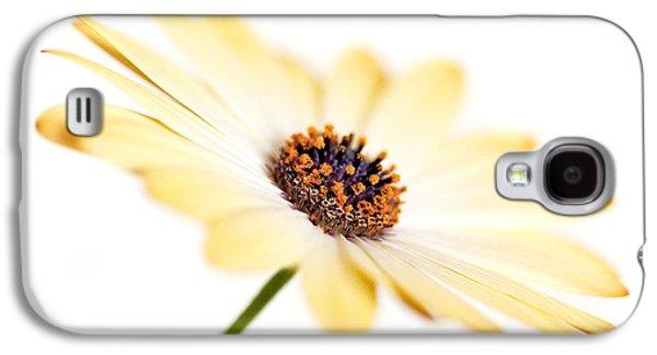 Nature Study Digital Art Galaxy S4 Cases - Osteospermum Sunny Flower I Galaxy S4 Case by Natalie Kinnear