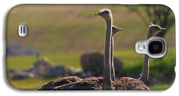 Ostriches Galaxy S4 Case by Dan Sproul