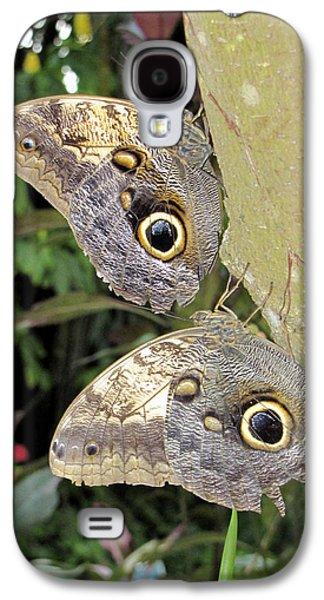 Butterfly Prey Galaxy S4 Cases - Owl Butterflies Galaxy S4 Case by Bob Slitzan