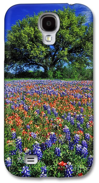 Live Oaks Galaxy S4 Cases - Paintbrush and Bluebonnets - FS000057 Galaxy S4 Case by Daniel Dempster