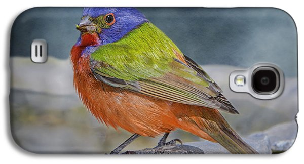 Painted Bunting In April Galaxy S4 Case by Bonnie Barry