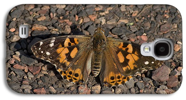 Macro Photographs Galaxy S4 Cases - Painted Lady Butterfly Galaxy S4 Case by Robert Carr