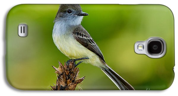 Pale-edged Flycatcher Galaxy S4 Case by Anthony Mercieca
