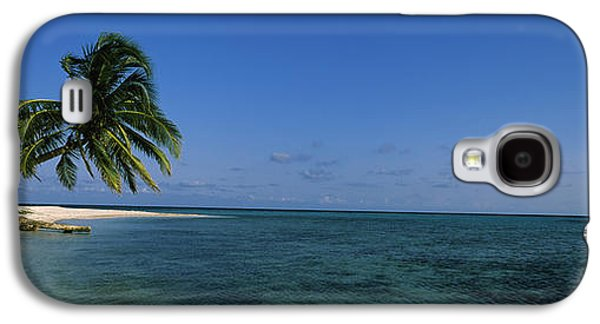 Overhang Photographs Galaxy S4 Cases - Palm Tree Overhanging On The Beach Galaxy S4 Case by Panoramic Images