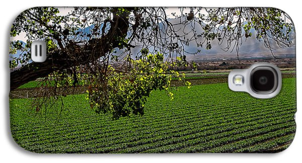 Romaine Galaxy S4 Cases - Panoramic of Winter Lettuce Galaxy S4 Case by Robert Bales