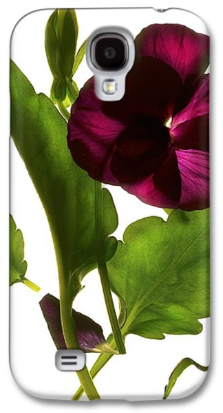 Pansy Purple Galaxy S4 Case by Julia McLemore