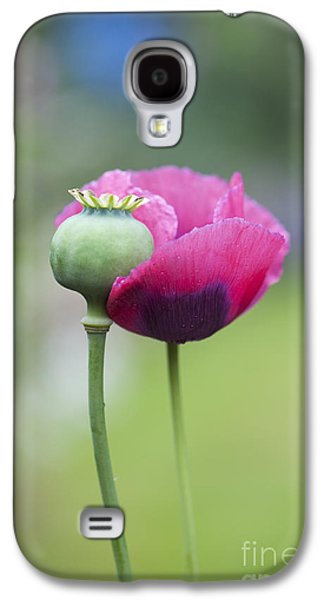 Filament Galaxy S4 Cases - Papaver Somniferum Poppy and Seed Pod Galaxy S4 Case by Tim Gainey