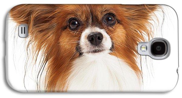 Headshot Galaxy S4 Cases - Papillon Dog Closeup Galaxy S4 Case by Susan  Schmitz
