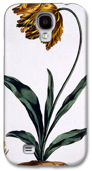 Flower Still Life Prints Galaxy S4 Cases - Parrot Tulip Galaxy S4 Case by John Edwards