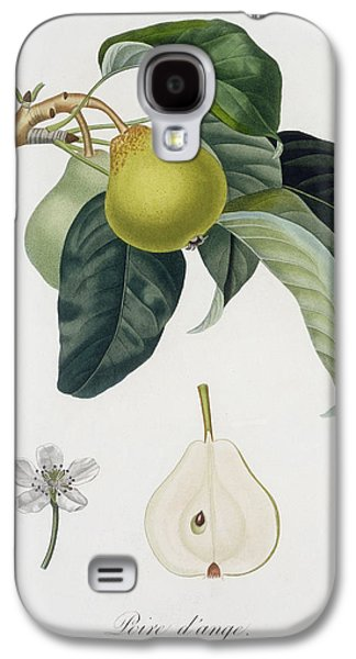 Flora Drawings Galaxy S4 Cases - Pear Galaxy S4 Case by Pierre Antoine Poiteau