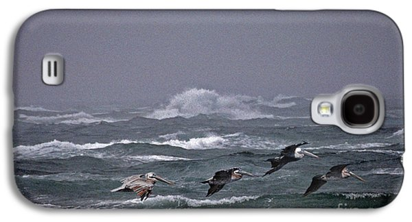 Photos Of Birds Galaxy S4 Cases - Pelicans In A Row Galaxy S4 Case by Skip Willits