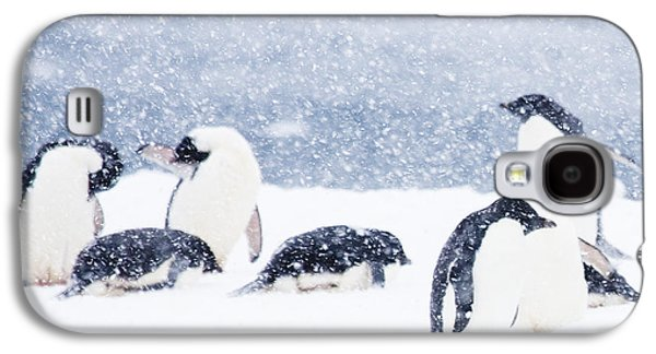 Penguins In The Snow Galaxy S4 Case by Carol Walker