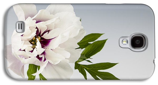 Studio Photographs Galaxy S4 Cases - Peony flower on gray Galaxy S4 Case by Elena Elisseeva