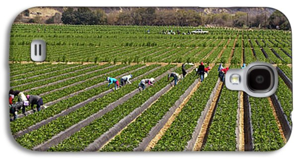 People Picking Strawberries In A Field Galaxy S4 Case by Panoramic Images