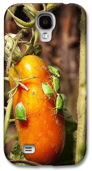 Agronomy Galaxy S4 Cases - Pest attack Galaxy S4 Case by Sinisa Botas