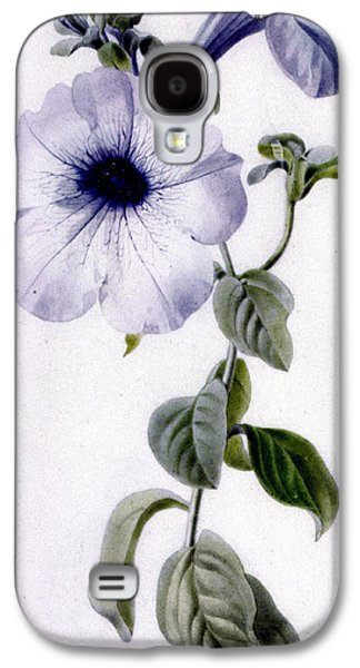 Purple Drawings Galaxy S4 Cases - Petunia Galaxy S4 Case by Marie-Anne