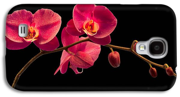 Florida Flowers Photographs Galaxy S4 Cases - Phalaenopsis Galaxy S4 Case by Debra and Dave Vanderlaan