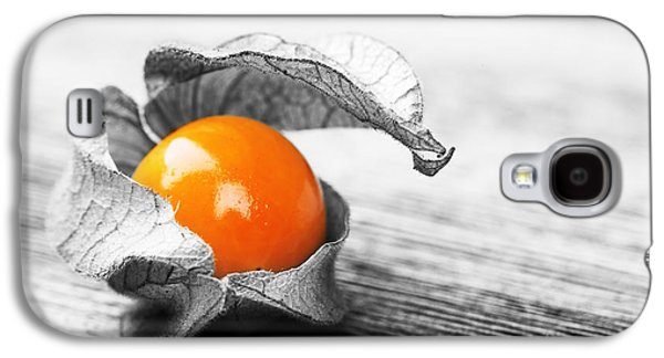 Studio Photographs Galaxy S4 Cases - Physalis Galaxy S4 Case by Jane Rix