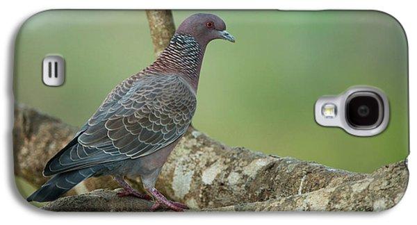 Picazuro Pigeon (patagioenas Picazuro Galaxy S4 Case by Pete Oxford