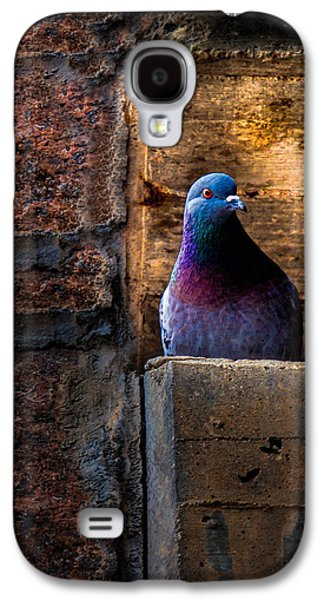 Factory Galaxy S4 Cases - Pigeon of the City Galaxy S4 Case by Bob Orsillo