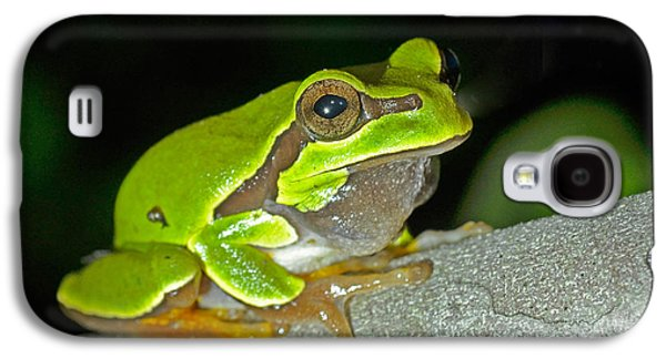Pine Barrens Galaxy S4 Cases - Pine Barrens Tree Frog Hyla Andersonii Galaxy S4 Case by John Serrao