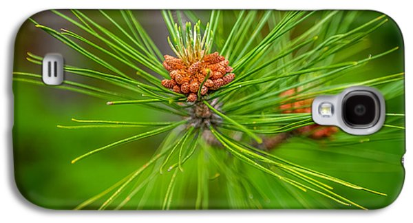 Pine Cones Photographs Galaxy S4 Cases - Pine cone Galaxy S4 Case by Paul Freidlund