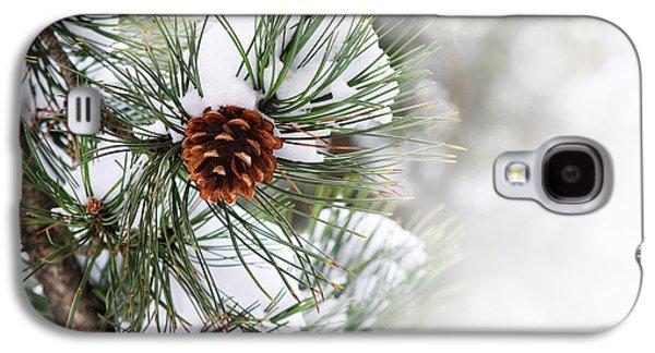 Green Pyrography Galaxy S4 Cases - Pine tree Galaxy S4 Case by Jelena Jovanovic