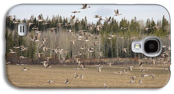 Canadian Pyrography Galaxy S4 Cases - Pineview Flocks Galaxy S4 Case by Erin Ross