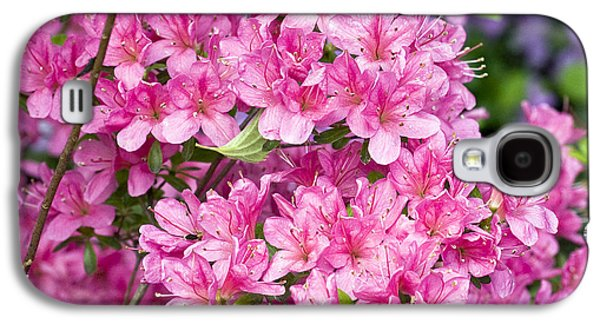 Rhododendron Galaxy S4 Cases - Pink And Blue Rhododendron Galaxy S4 Case by Frank Tschakert