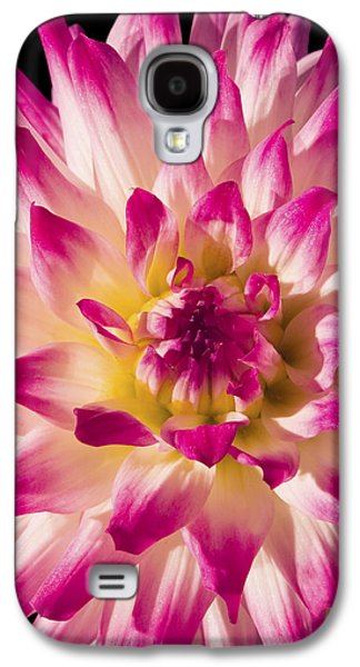 Cut Flowers Galaxy S4 Cases - Pink and White Dahlia Flower Galaxy S4 Case by Keith Webber Jr
