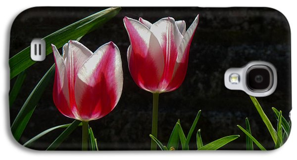 Cheekwood Galaxy S4 Cases - Pink and White Tulip Galaxy S4 Case by Paula Ponath