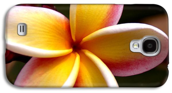Flower Of Life Galaxy S4 Cases - Pink and Yellow Plumeria Galaxy S4 Case by Brian Harig