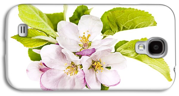 Fruit Tree Galaxy S4 Cases - Pink apple blossoms Galaxy S4 Case by Elena Elisseeva