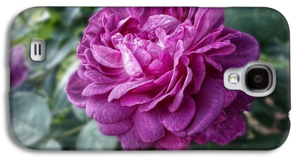 Pink Beauty Galaxy S4 Case by Linda Unger