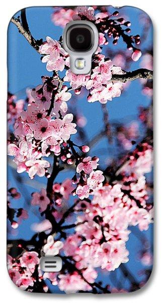 Apple Trees Galaxy S4 Cases - Pink Blossoms On The Tree Galaxy S4 Case by Irina Sztukowski