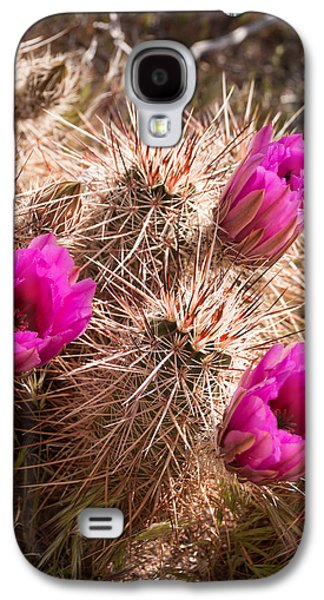 Galaxy S4 Cases - Pink Cactus Flowers in Bloom along Old Route 66 near Cool Springs Arizona Galaxy S4 Case by Robert Ford