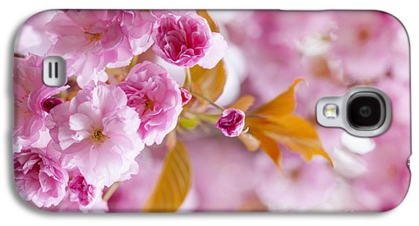 Cherry Blossoms Photographs Galaxy S4 Cases - Pink cherry blossoms in spring orchard Galaxy S4 Case by Elena Elisseeva