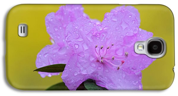 Rainy Day Photographs Galaxy S4 Cases - Pink Spring Blossom Galaxy S4 Case by Juergen Roth