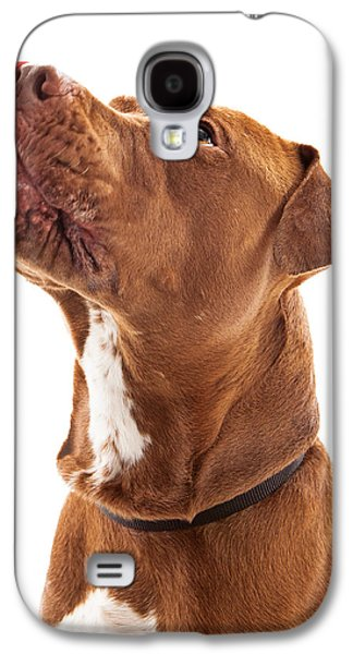 Guard Dog Galaxy S4 Cases - Pit Bull Dog Licking Lips Galaxy S4 Case by Susan  Schmitz
