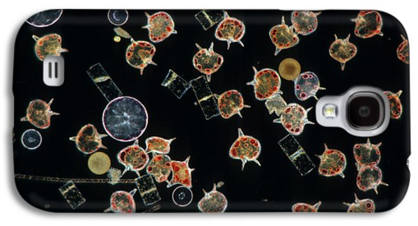 Nature Abstracts Galaxy S4 Cases - Plankton Dinoflagellates And Diatoms X20 Galaxy S4 Case by D P Wilson